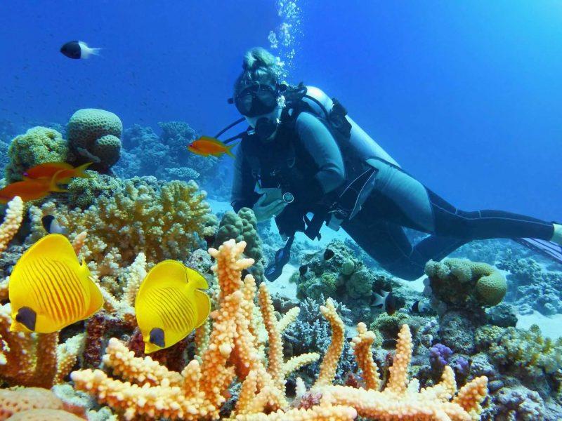 Plongée sous-marine : une activité à faire à Giens